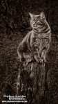 photographe-photo-portrait-animaux